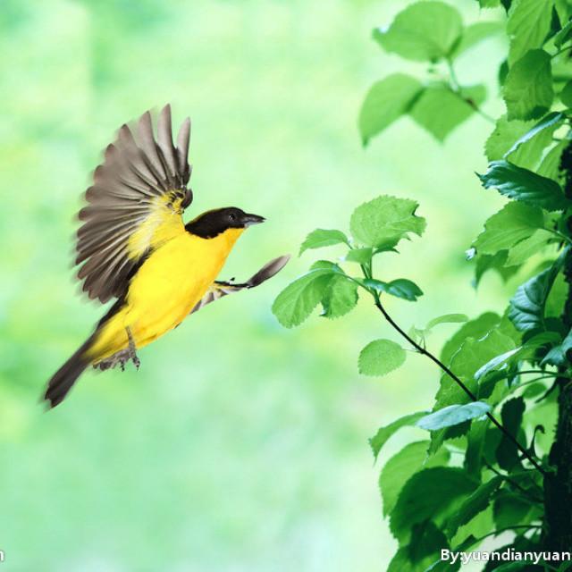 学说普通话:作品48号-《小鸟的天堂》
