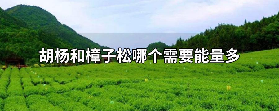 胡楊和樟子松哪個需要能量多