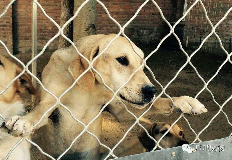 【宠物公益宣传片】在线收听