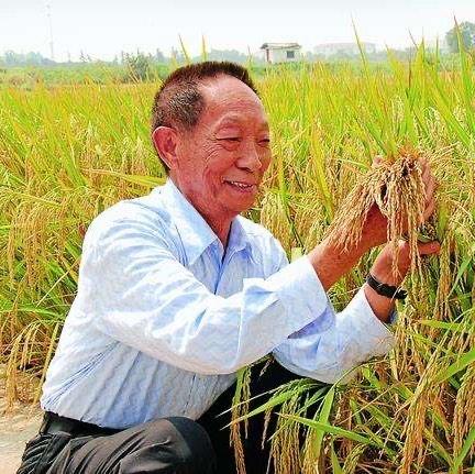 袁隆平是不是杂交水稻之父?