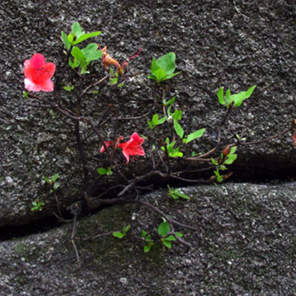 林希:石缝间的生命