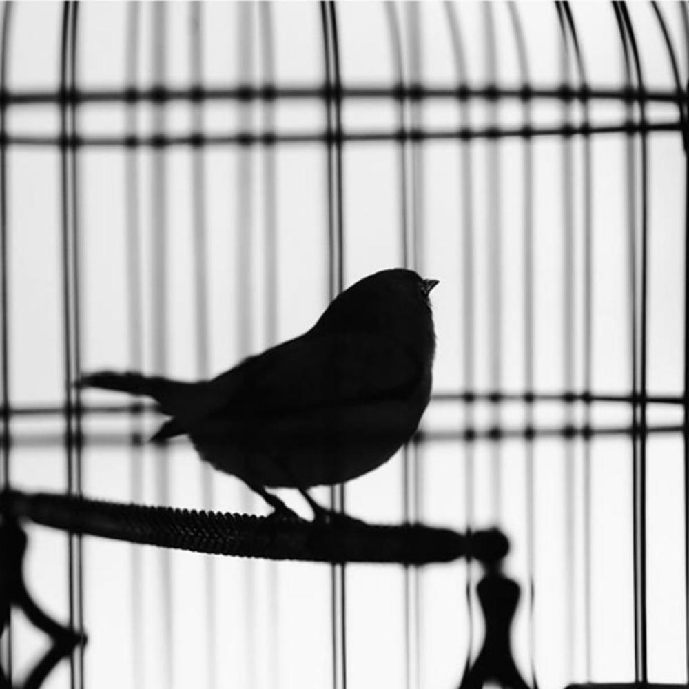 梵高:笼中鸟(写给提奥)